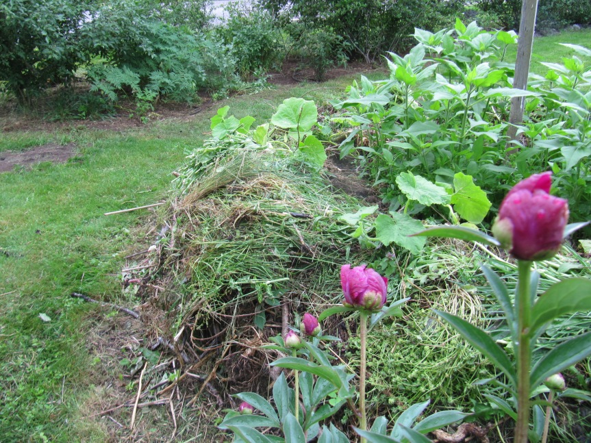 Det går att mata en kompostlimpa även när plantorna är på plats.